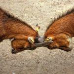 comment eviter conflit association accroche chouponline