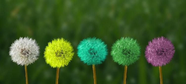 relation toxique monde associatif chouponline fleurs