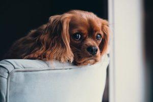 solution pour animaux pendant les vacances canape chouponline