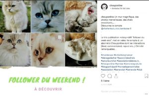 creer un buzz pour association chouponline follower du we 1