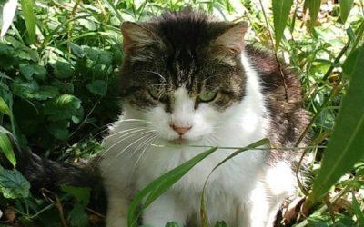 Bénévole: une vie consacrée aux chats libres