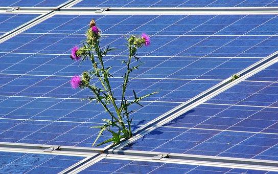 Devenir bénévole dans une association pour environnement chouponline panneaux solaires