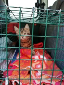 benevole chats coeur de pattounes chouponline chat en cage