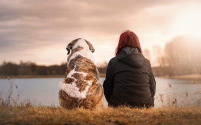 Manque de communication en association canine : quel impact ?