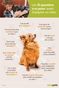 Manque de communication en association canine chouponline bonne pratique adoption 2