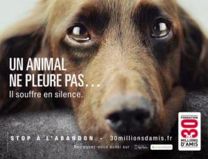 Manque de communication en association canine chouponline chien qui pleure