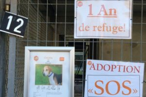 Manque de communication en association canine chouponline trop longtemps au refuge