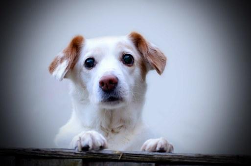 association animaux abandonnés abandon animaux de compagnie chouponline chiot