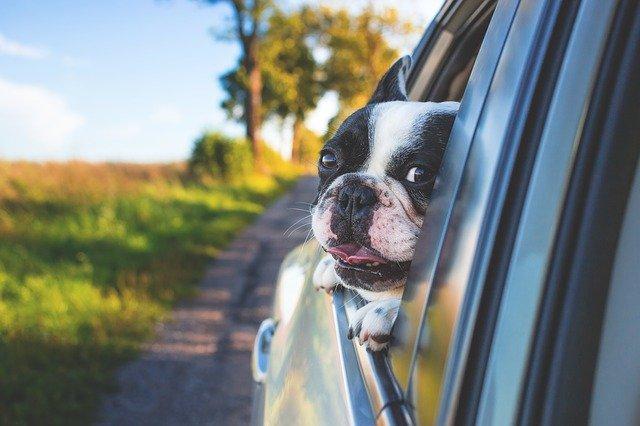 association animaux abandonnés abandon animaux de compagnie chouponline voiture 2