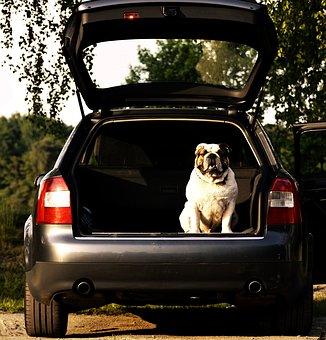 association animaux abandonnés abandon animaux de compagnie chouponline voiture